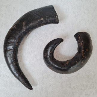 Buffalo horns, buffalo horn dog chews, natural dog chews, buffalo horns for dogs