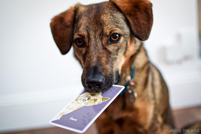 Calm dog games, brain training for dogs, brain games for dogs, mental stimulation for dogs, games cards for dogs
