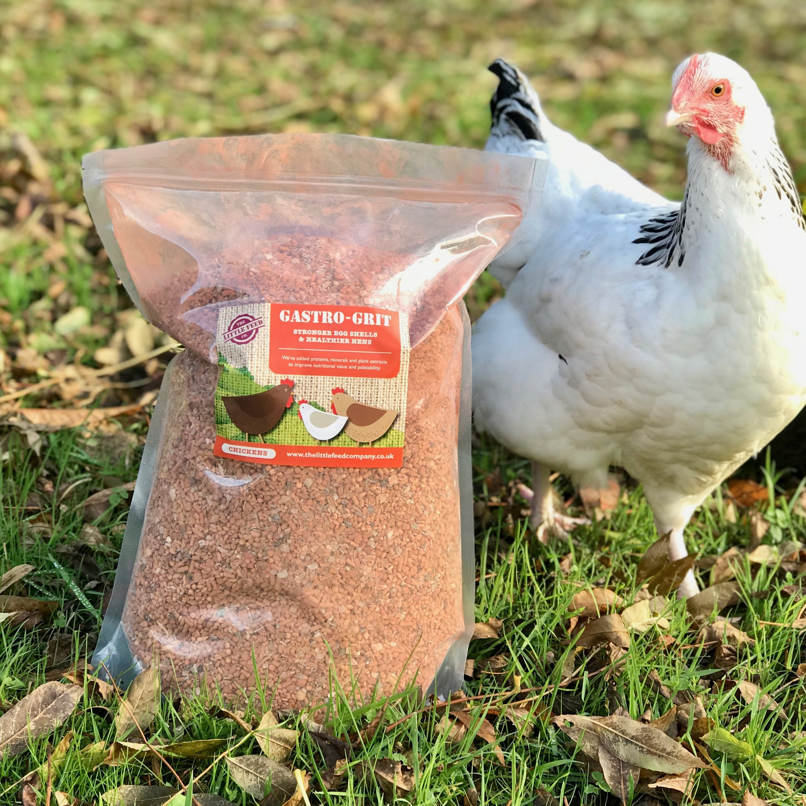 Chicken grit, Gastro Grit, the best chicken grit, oyster shell grit for chickens