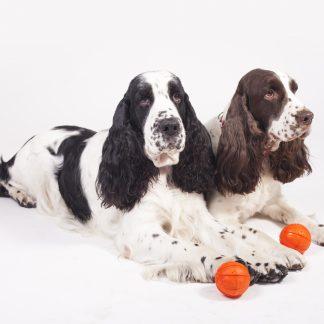 Liker dog ball