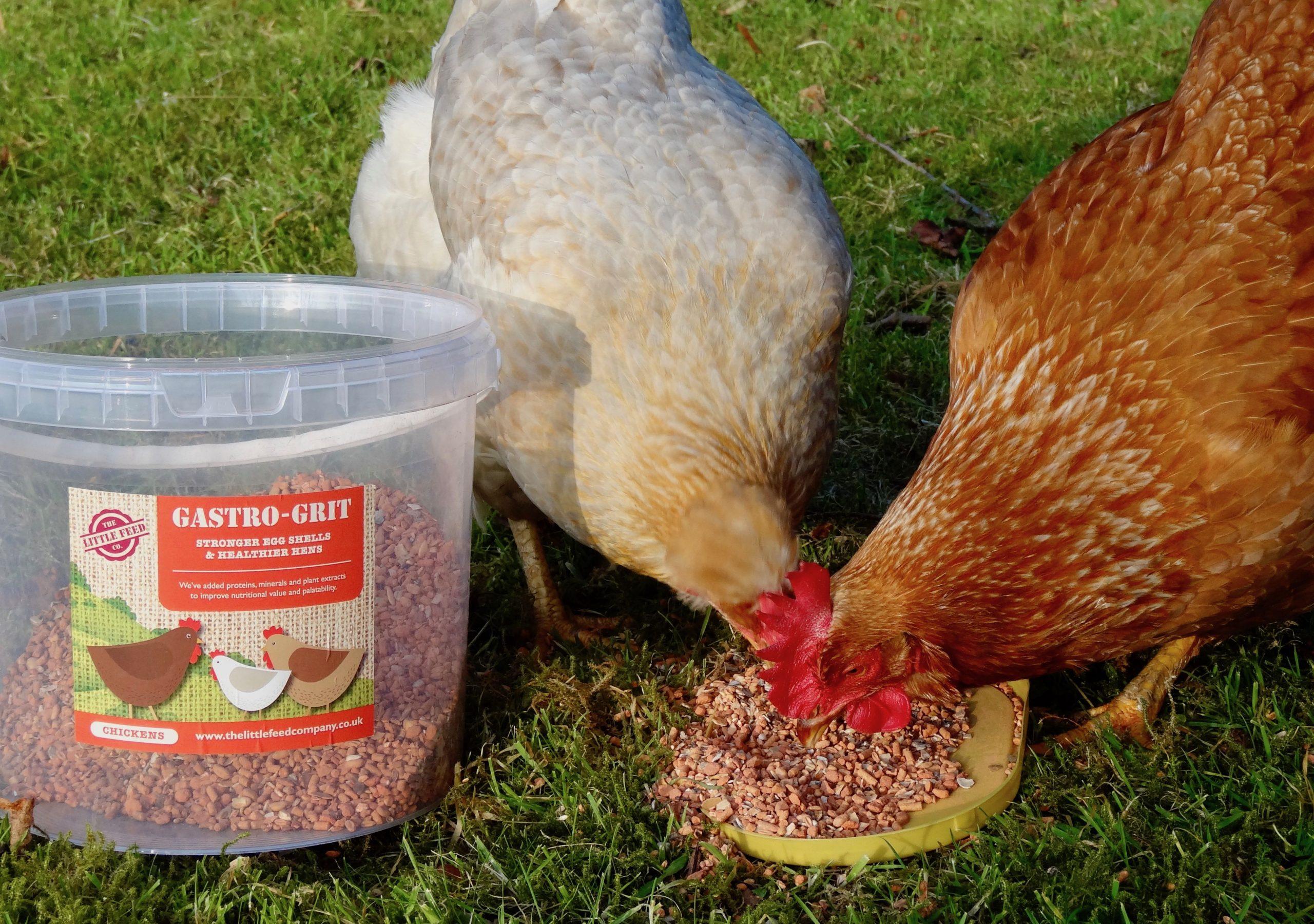 The best chicken grit, Gastro Grit