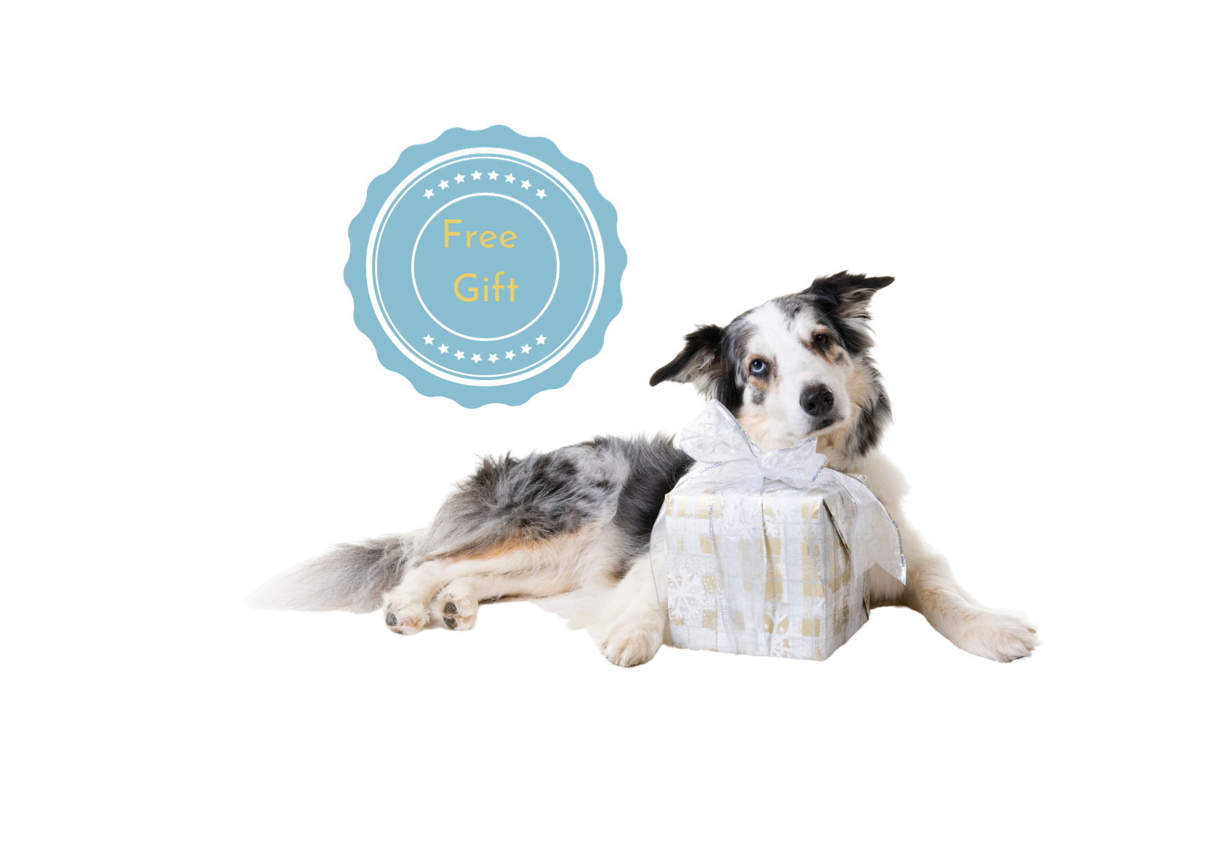 Pawsitive Thinking discount, pawsitivethinking voucher code