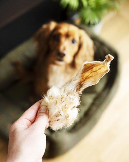 long lasting dog chews, natural dog chews, free range rabbit ears, rabbit ears for dogs, dried rabbit ears