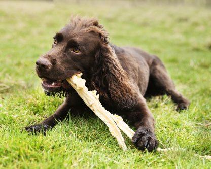 jumbo dog chews, natural dog chews, giant dog chews, long lasting dog chews