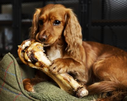 ostrich bone for dogs, long lasting dog chews, natural dog chews