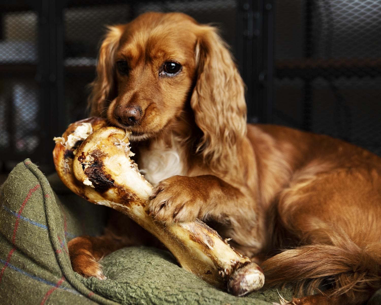 Ostrich bone for dogs, Ostrich bone, JR pet products ostrich bone, long lasting dog chews, natural dog chews