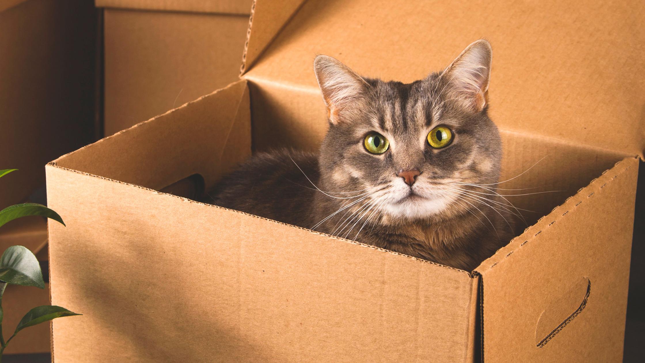 Cat enrichment, feline enrichment, enrichment ideas for cats, natural cat treats, interactive cat toys